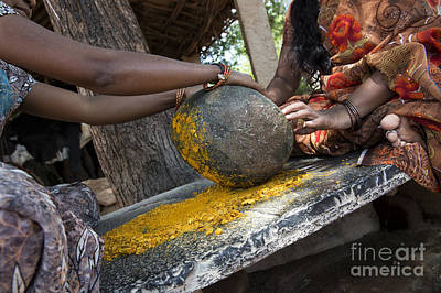 Crushing Turmeric Roots To Powder Print by Tim Gainey