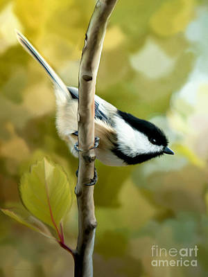 Chickadee Mixed Media -  Day Dreams by Beve Brown-Clark Photography