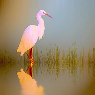 Stork Digital Art -  Egret In Sunlight by Sharon Lisa Clarke