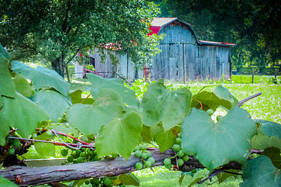 Red Roof Photograph -  Fields Of Green by Karen Wiles