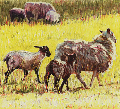 Sheep Drawing -  Following by Helen White