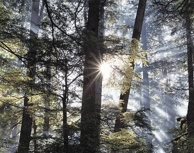 Forest Sunrise Print by Leland D Howard