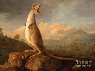 Long Tail Forest Print by George Stubbs