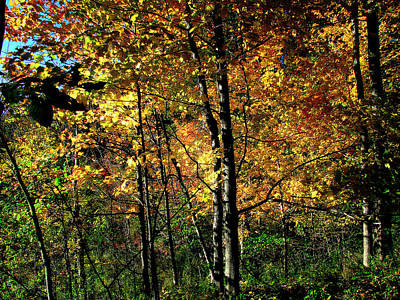 Michigan Fall Colors 2  Print by Scott Hovind