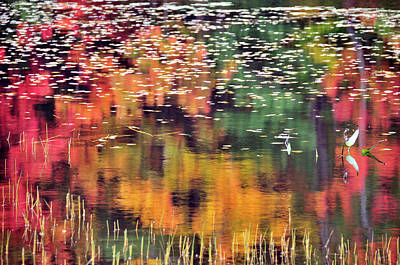 New England Reflections Print by Betty LaRue
