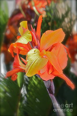 Orange Bright Print by Maureen J Haldeman