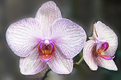 Orchid Flowers Print by Art Spectrum