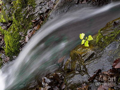 Pink Black Tree Rainbow Photograph -  River by Odon Czintos