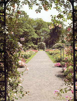 Walkway Digital Art -  Rose Garden Vista by Jessica Jenney