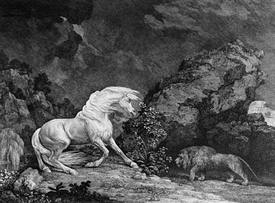 Rural Art Drawing - A Horse Affrighted By A Lion by George Stubbs