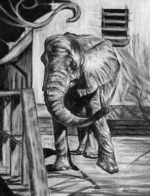 Enclosure Drawing - African Elephant by Kacey Thorn