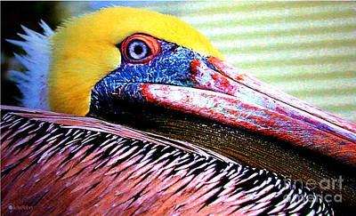 Albatross King Original by John Mabry