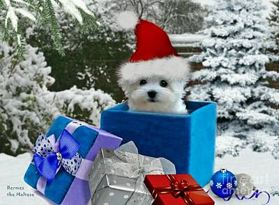 Dog Photograph - All I Want For Christmas by Morag Bates