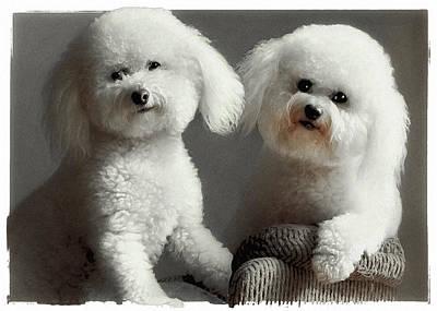 Cute Dog Digital Art - All Smiles by Lynn Andrews
