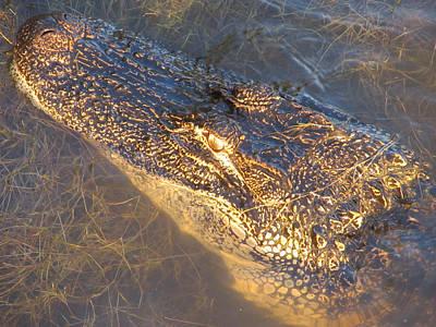 Alligator Print by Michele Caporaso
