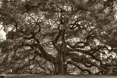 Angel Oak Live Oak Tree Original by Dustin K Ryan
