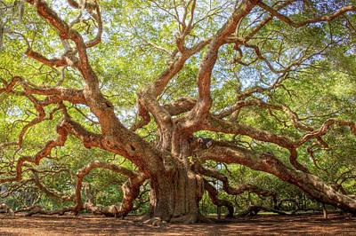 Angel Oak Tree Print by Drew Castelhano