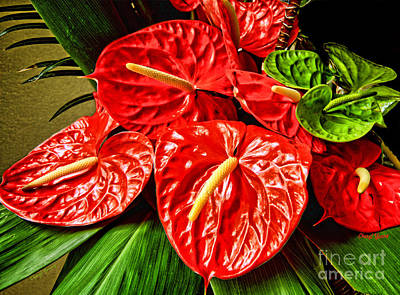 Anthurium Photograph - Anthurium  by Cheryl Young