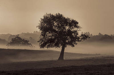Appleton Photograph - Appleton Tree by David Stone