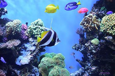 Clarks Anemonefish Photograph - Aquarium 3 by Barbara Snyder