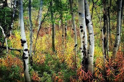 Photograph - Aspen Fall 2 by Marty Koch