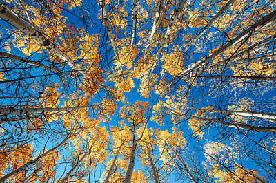 Clear Weather Photograph - Aspen Art by Todd Klassy