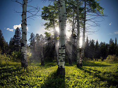 Forest Light Photograph - Aspen Light by Leland D Howard