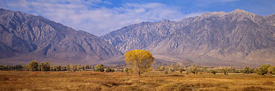 Vale Photograph - Autumn Color Along Highway 395, Sierra by Panoramic Images