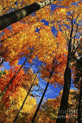 Autumn Forest Print by Elena Elisseeva