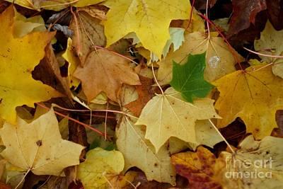 Autumn Leaves  Print by Gary Bridger