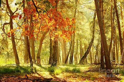 Hjbh Photograph - Autumn Light... by LHJB Photography