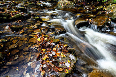 West Fork Photograph - Autumn Upper Shavers Fork Preserve by Thomas R Fletcher