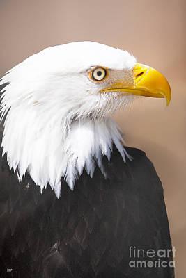 Eagle Photograph - Bald Eagle Profile by David Millenheft
