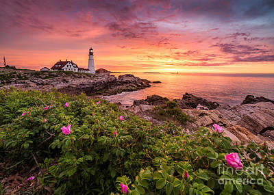 Beach Rose At Portland Head Light Print by Benjamin Williamson