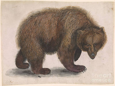Bear Print by Celestial Images