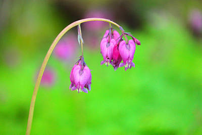 Forest Floor Photograph - Beautiful Hearts by Jeff Swan