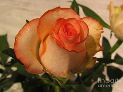 Photograph - Beautiful  Rose by Joyce Woodhouse