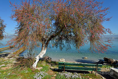 Benches Photograph - Bench By The Seaside During Springtime by George Atsametakis