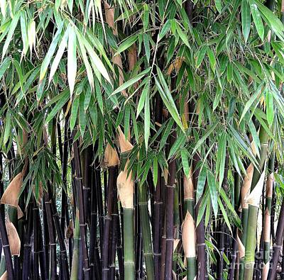 Black Bamboo Print by Mary Deal