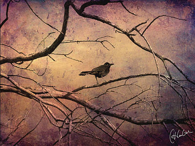 Flypaper Textures Photograph - Blackbird 1 by Christine Hauber