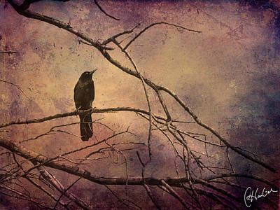 Flypaper Textures Photograph - Blackbird 2 by Christine Hauber