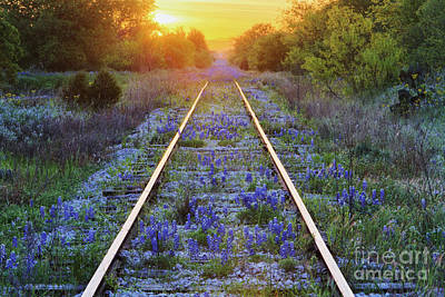 Multi Colored Photograph - Blue Bonnets On Railroad Tracks by Jeremy Woodhouse