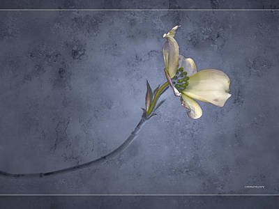Blue Spring Print by Ron Jones