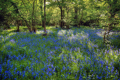Bluebells In The New Forest Print by Joana Kruse