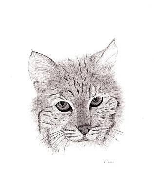 Bobcat Print by Ed Einboden