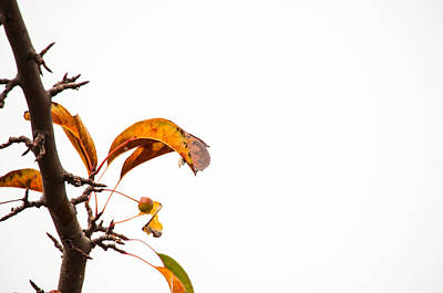 Of Autumn Photograph - Branch Of Autumn by Karol Livote