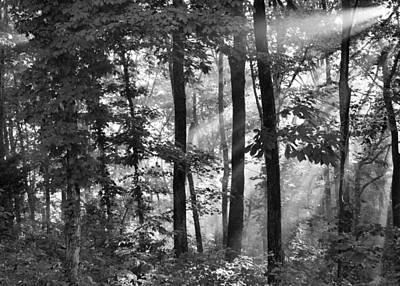 Breaking Through The Canopy Print by Kristin Elmquist