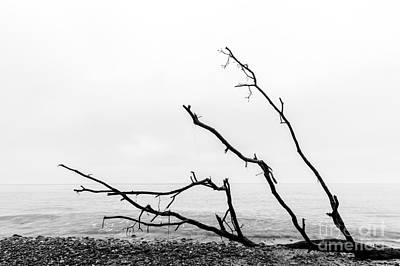 Stones Photograph - Broken Tree Branches On The Beach After Storm by Michal Bednarek