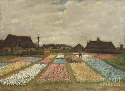 Tulip Painting - Bulb Fields by Celestial Images