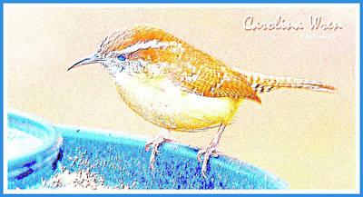 Carolina Wren Digital Art - Carolina Wren, Winter Wren On Bird Feeder, Digital Art by A Gurmankin